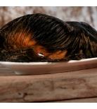 Barfgold Knochen/Knorpel Rinderohren mit Fell & Muschel 1 Stück