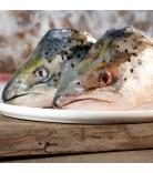 Barfgold Fisch Lachsköpfe ganz 1kg