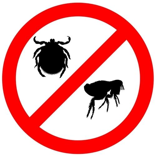 Parasiteschutz